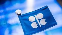 Qatar rời OPEC: Hệ quả từ sự chi phối của Saudi Arabia và Nga