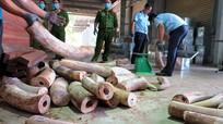 Phó Thủ tướng Trương Hòa Bình chỉ đạo điều tra vụ vận chuyển trái phép 9,1 tấn ngà voi