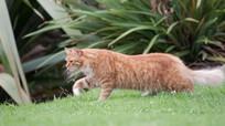 63 loài động vật đang bị đe dọa tuyệt chủng vì sự bùng nổ số lượng mèo nhà