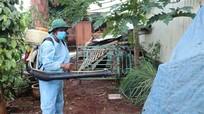 Nghệ An nằm trong danh sách Bộ Y tế kiểm tra giám sát phòng chống sốt xuất huyết