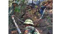 Khống chế vụ cháy rừng thông ở Cửa Lò