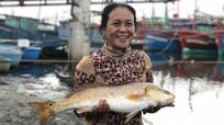 Người dân bắt được cặp cá lạ nghi sủ vàng tiền tỷ