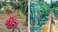 Sôi động hướng liên kết sản xuất từ chuỗi vườn mẫu ở Thanh Chương