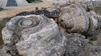 Phát hiện nghĩa địa hóa thạch 5.000 năm ở Lý Sơn