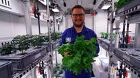 Độc, dị trồng rau không cần đất và ánh nắng