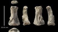 Hóa thạch xương người lâu đời nhất khai quật ngoài châu Phi