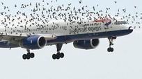 Robot giúp giảm nguy cơ chim va vào máy bay