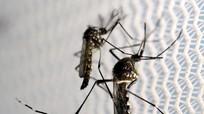 Dùng trí tuệ nhân tạo để chống muỗi