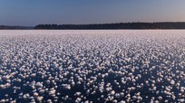Hàng nghìn 'hoa băng' nở trên hồ nước ngọt ở Nga