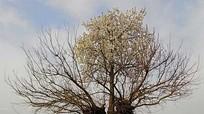 Bí ẩn cây mọc trên cây siêu kỳ quái, ai cũng tò mò