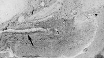 Phát hiện hóa thạch giun 500 triệu năm tuổi dưới đáy biển cổ đại
