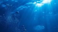 Tìm thấy vi sinh vật ăn dầu mỏ trong vũng Mariana