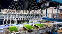 Cỗ máy trồng hàng nghìn cây non mỗi giờ