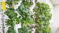 Tháp trồng rau xanh mướt trên sân thượng của ông bố Sài Gòn
