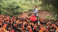 Nghệ An khuyến khích phát triển các giống gia cầm đặc sản chất lượng cao
