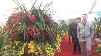 Hoa Trung Quốc tràn ngập chợ Tết