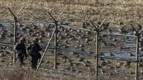 Hàn - Triều nhất trí rút trạm gác biên giới; Saudi Arabia không tái áp đặt cấm vận dầu mỏ