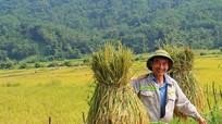Kỳ tích của đồng bào Thái Nghệ An ở nơi 'đất mỏng, đá dày'