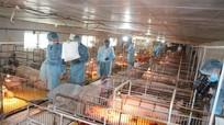 Quyết định mới của Chính phủ về mức hỗ trợ phòng, chống dịch tả lợn châu Phi