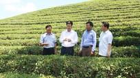 Tạo đột phá trong nông nghiệp ở huyện Anh Sơn