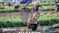 Vì sao diện tích trồng lạc ở Nghệ An giảm mạnh?