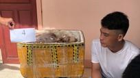 Nam thanh niên Nghệ An gom sơn dương, hoẵng, dúi rừng bán cho các đầu nậu