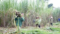 Khởi sắc nông nghiệp Tân Kỳ