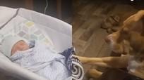 Bé sơ sinh ngủ ngon lành khi được chú chó đưa nôi