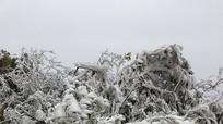 Thời tiết 3/2: Trung bộ mưa rải rác và băng giá, Bắc bộ có nơi - 0.3 độ C