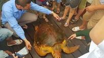 Từ chối bán với giá 10 triệu đồng, ngư dân thả rùa quý hiếm về tự nhiên