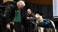 Chuyện lạ: Chú chó được Đại học Mỹ trao bằng danh dự