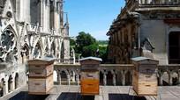 Đàn ong 180.000 con vẫn sống sót qua đám cháy Nhà thờ Đức Bà Paris