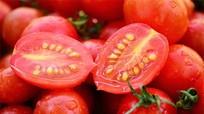 Bất ngờ với tác dụng tuyệt vời của hạt cà chua