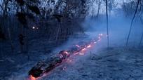 Rừng Amazon dự báo tiếp tục cháy trong vài tuần tới