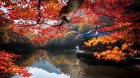 Mãn nhãn ngắm mùa lá đỏ tuyệt đẹp mùa Thu