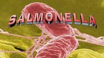 12 sản phẩm dinh dưỡng công thức nhiễm khuẩn Salmonella Poona nhập khẩu về Việt Nam