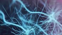 Phát hiện cơ quan mới khổng lồ trong… cơ thể người