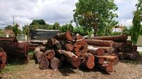Khởi tố hạt trưởng kiểm lâm tiếp tay cho trùm gỗ lậu
