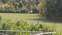 Bơm nước trên ruộng cỏ, nam thanh niên bị điện giật tử vong