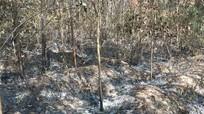 Nam thanh niên 3 lần đốt hơn 8.000m2 rừng để 'trả thù' ở Nghệ An