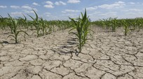 Việt Nam tăng 0,62% độ C trong hơn nửa thế kỷ, số ngày nắng nóng tăng 34 ngày/thập kỷ