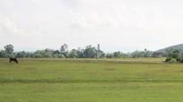 HĐND tỉnh Nghệ An cho ý kiến về chuyển đổi mục đích sử dụng đất thực hiện 505 dự án