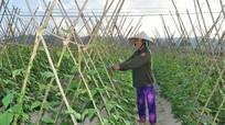 Quan tâm giải quyết các vấn đề bức xúc trong sản xuất nông, ngư nghiệp