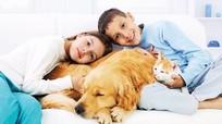 8 căn bệnh nguy hiểm dễ bị lây từ vật nuôi