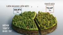 [Infographic] Hạn chế trong phát triển rừng nguyên liệu Nghệ An