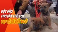 Độc đáo chợ bán chó con ở Nghệ An