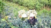 Nông dân Quỳnh Lưu (Nghệ An) năng động làm giàu