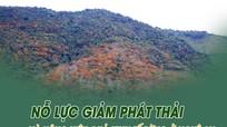 Nỗ lực giảm phát thải và nâng hiệu quả kinh tế rừng ở Nghệ An