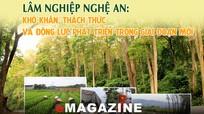 Lâm nghiệp Nghệ An: Khó khăn, thách thức và động lực phát triển trong giai đoạn mới