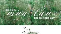 Xao xác mùa lau bãi bồi sông Lam